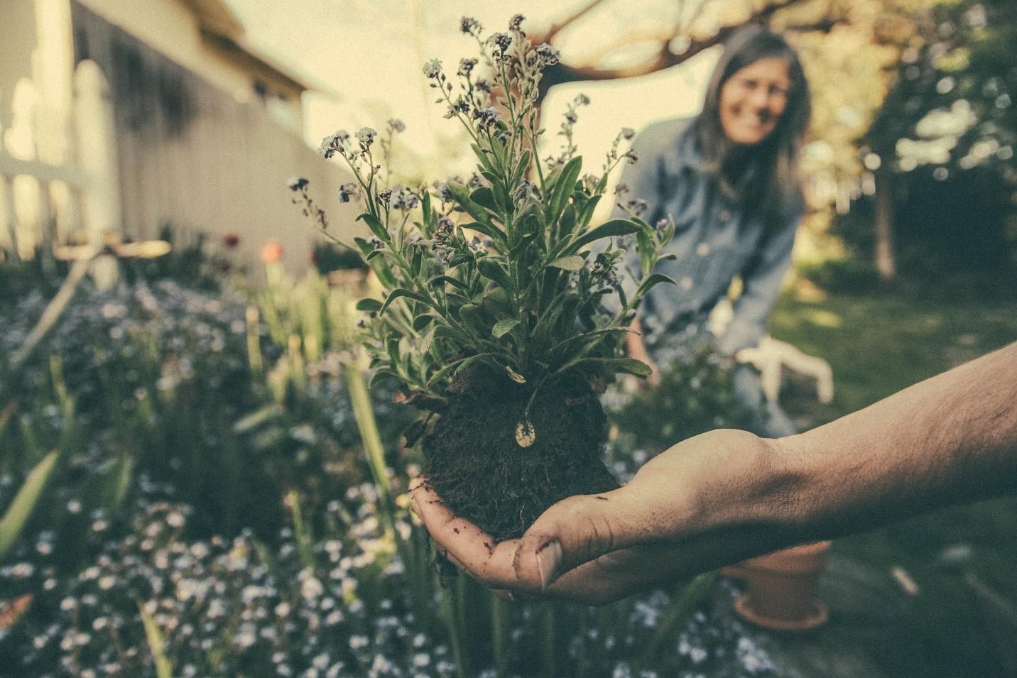 Spring 2020 Helpful Gardening Tips