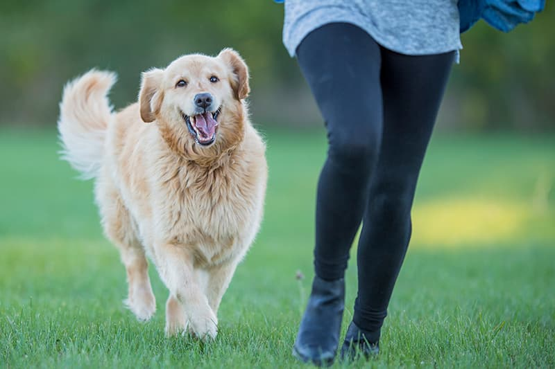 Great Ways To Exercise With Your Dog
